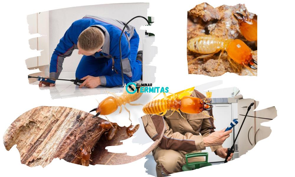 Eliminar termitas en Alconchel