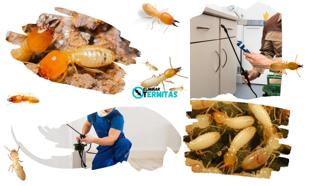 Eliminar termitas en Zamarra