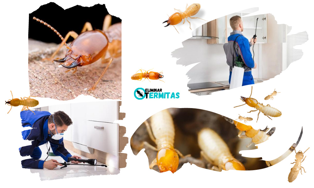 Eliminar termitas en Alburquerque