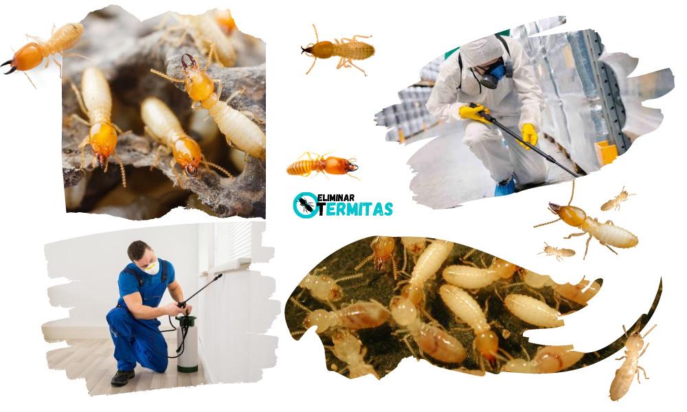 Como eliminar termitas en Madrid