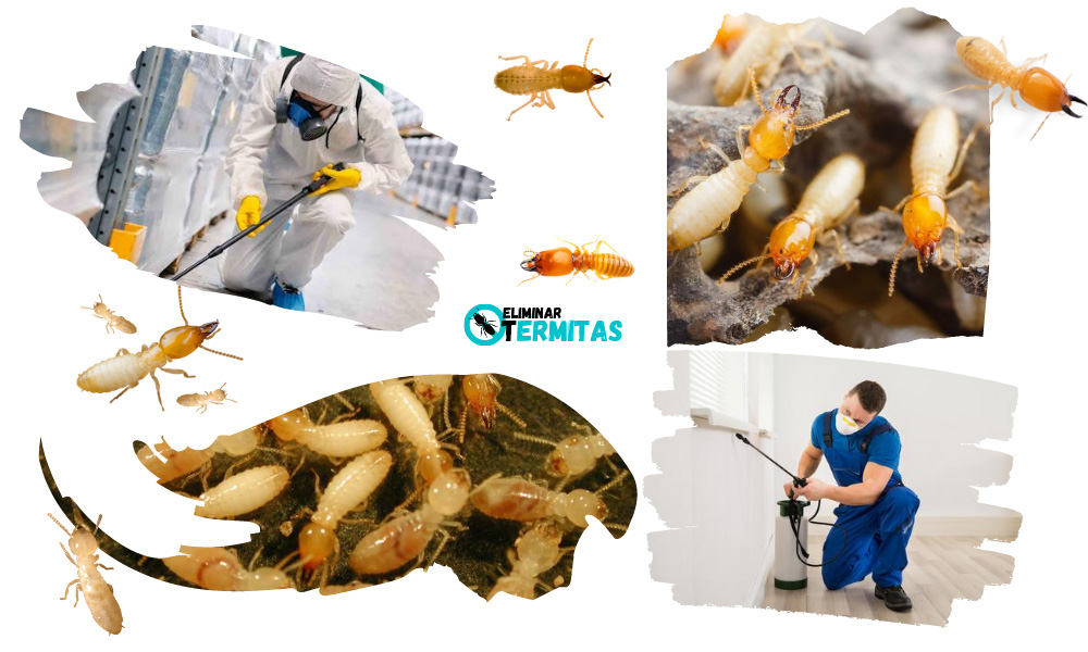 Como eliminar termitas en Pereña de la Ribera