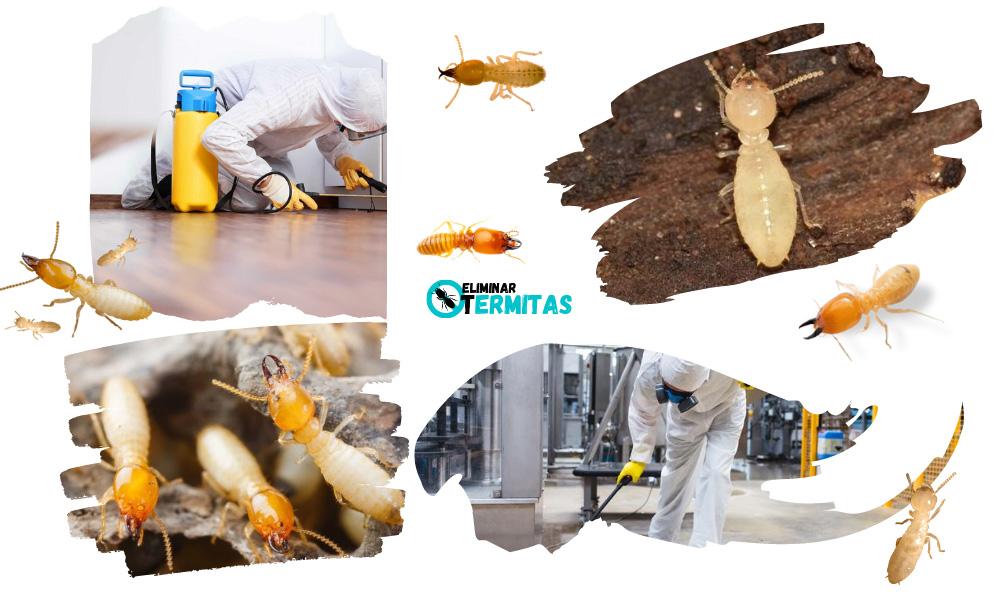 Como eliminar termitas en Alconada