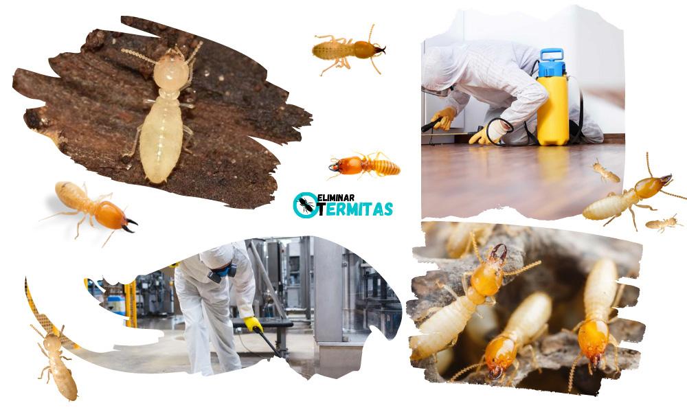 Como eliminar termitas en Badajoz