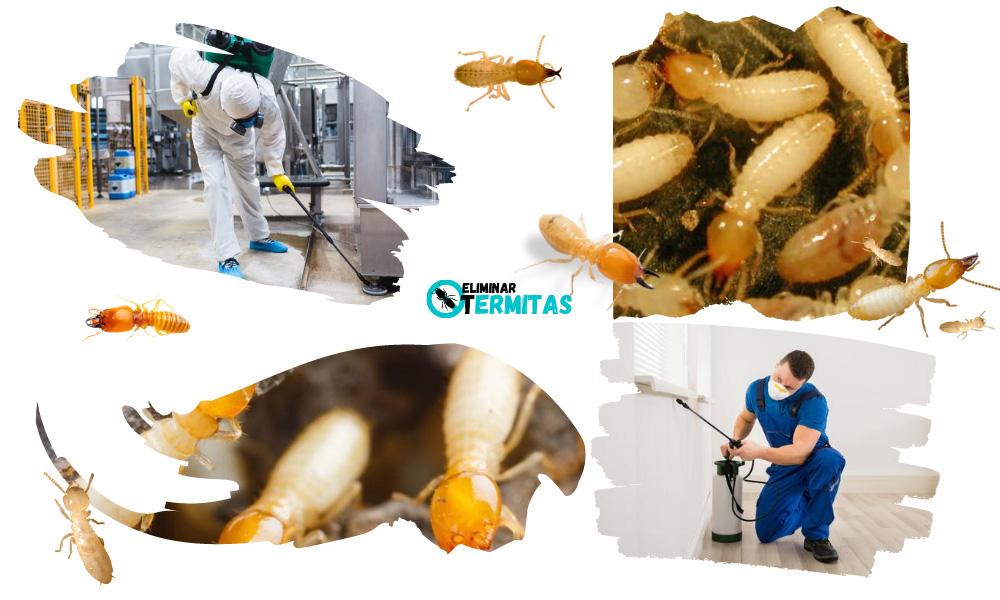 Como eliminar termitas en Camponaraya