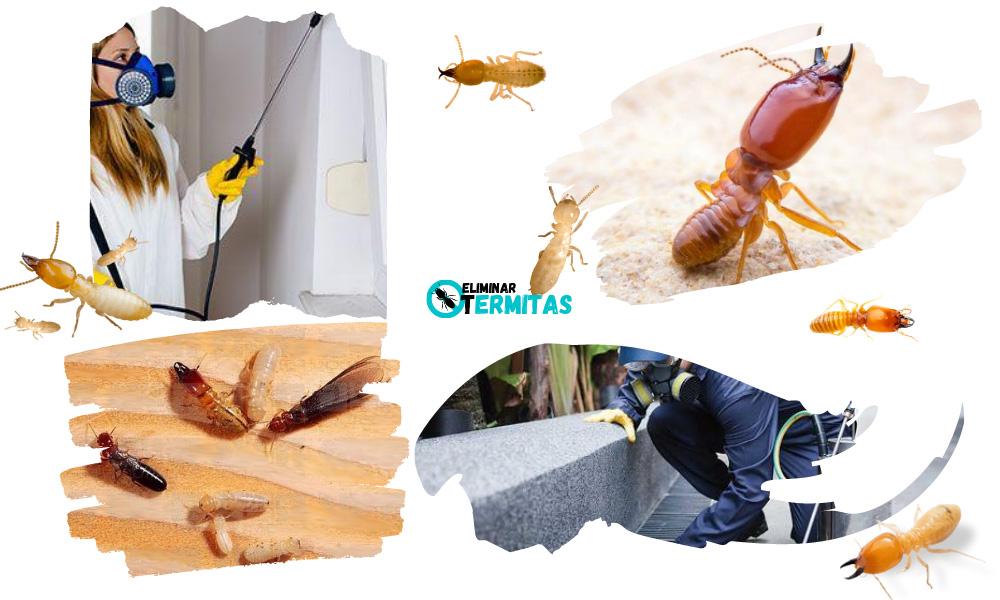 Como eliminar termitas en Asturias