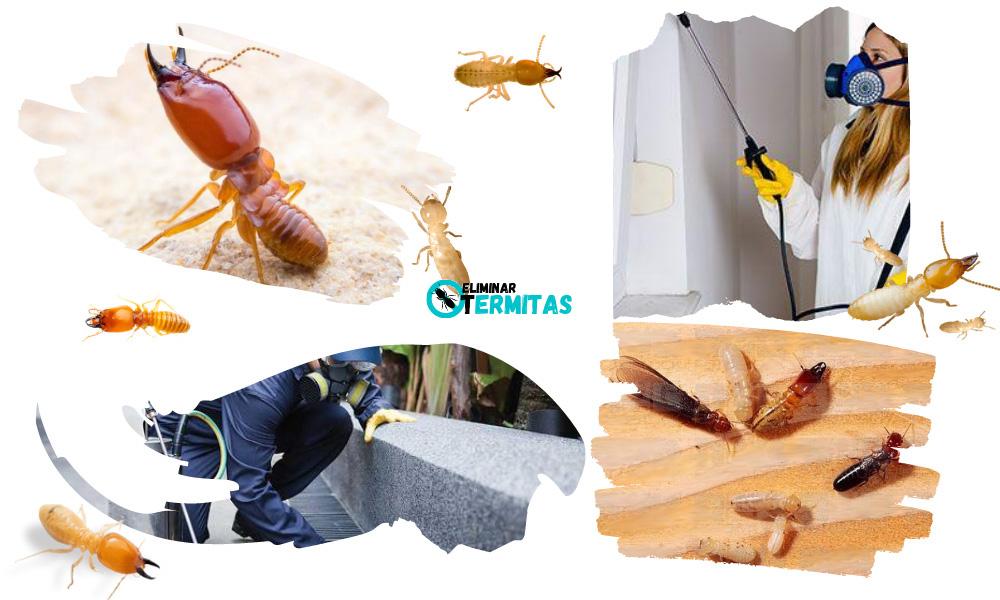 Como eliminar termitas en Navales