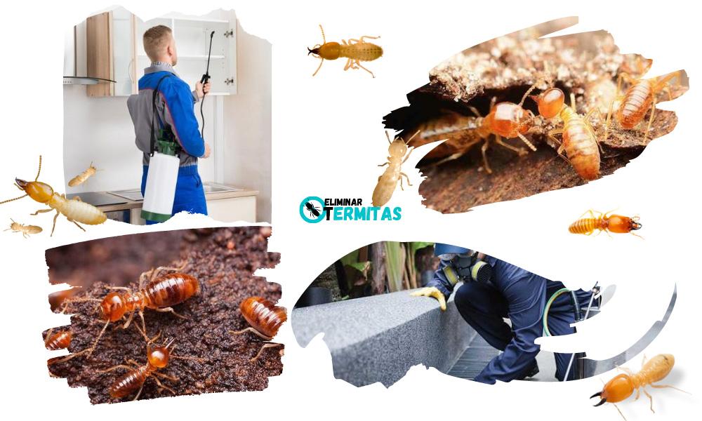 Como eliminar termitas en Lucillo