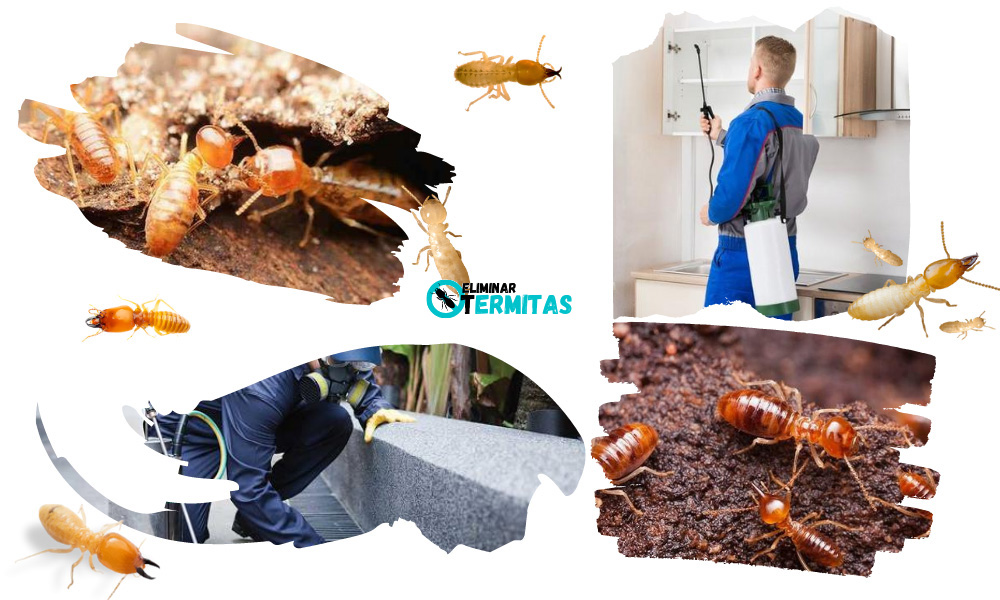 Como eliminar termitas en Puertas