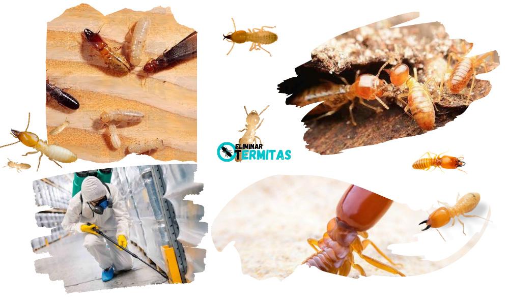Como eliminar termitas en Higuera la Real