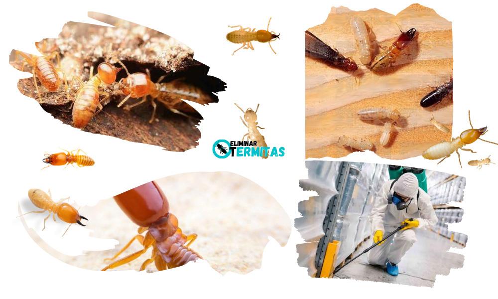 Como eliminar termitas en Valdelosa