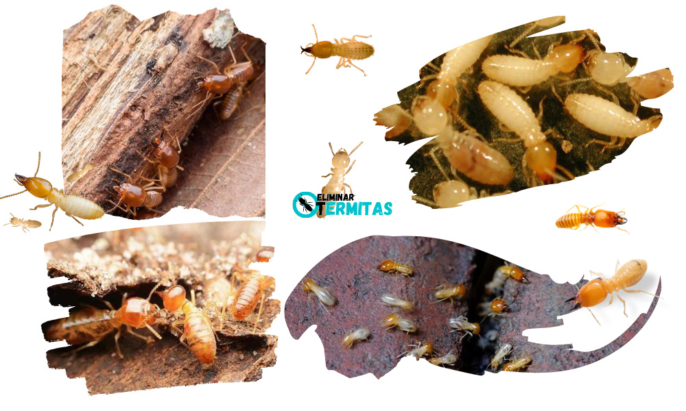 Eliminar termitas en Zaragoza