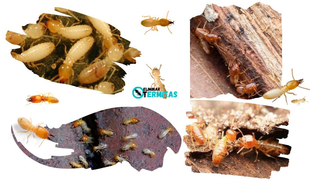 Eliminar termitas en Badajoz