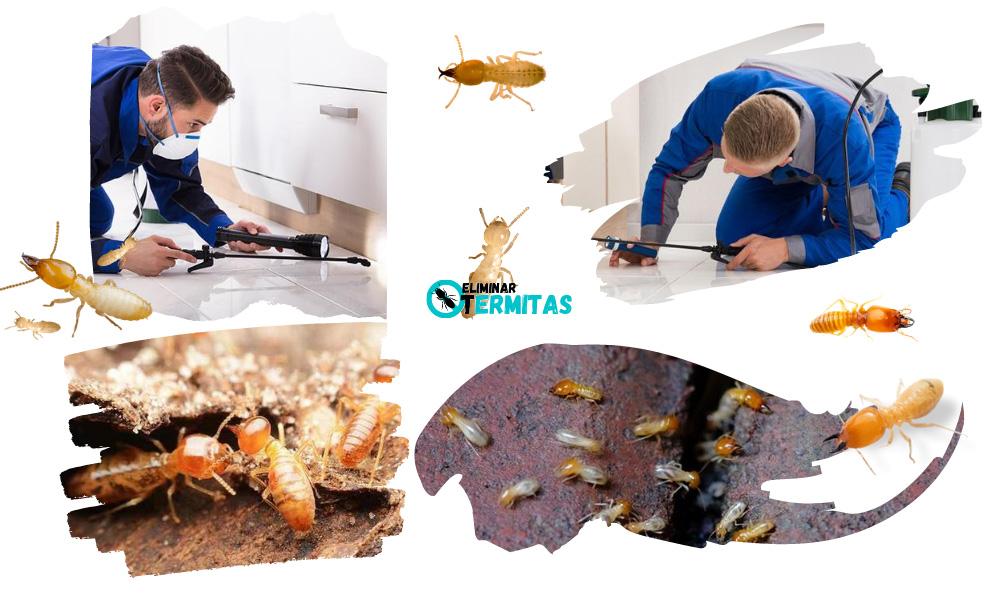 Eliminar termitas en Pereña de la Ribera