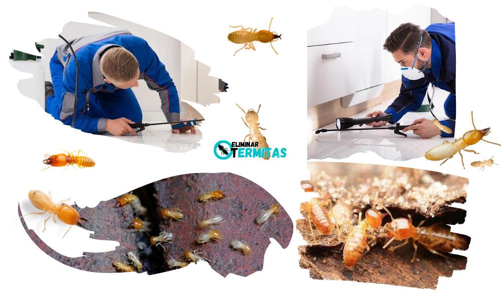 Eliminar termitas en Segovia