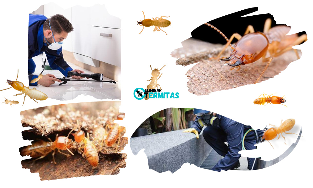 Eliminar termitas en Aldehuela de Yeltes