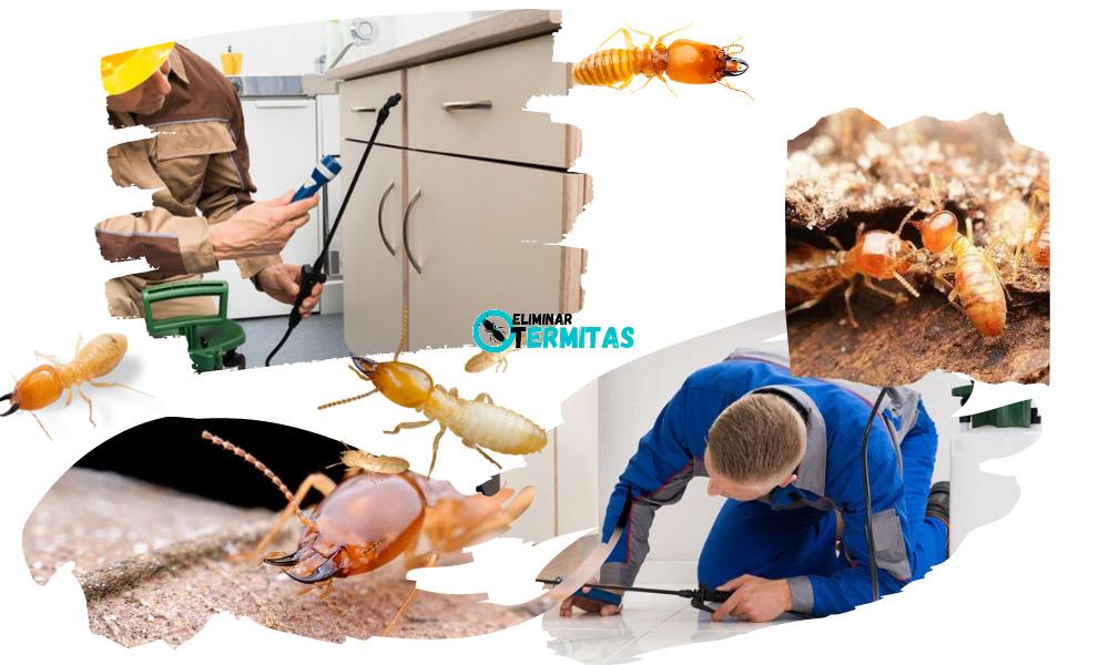 Eliminar termitas en Valdetorres