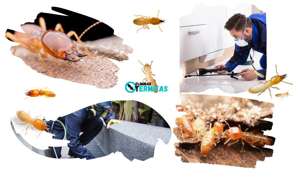 Eliminar termitas en Itsasondo