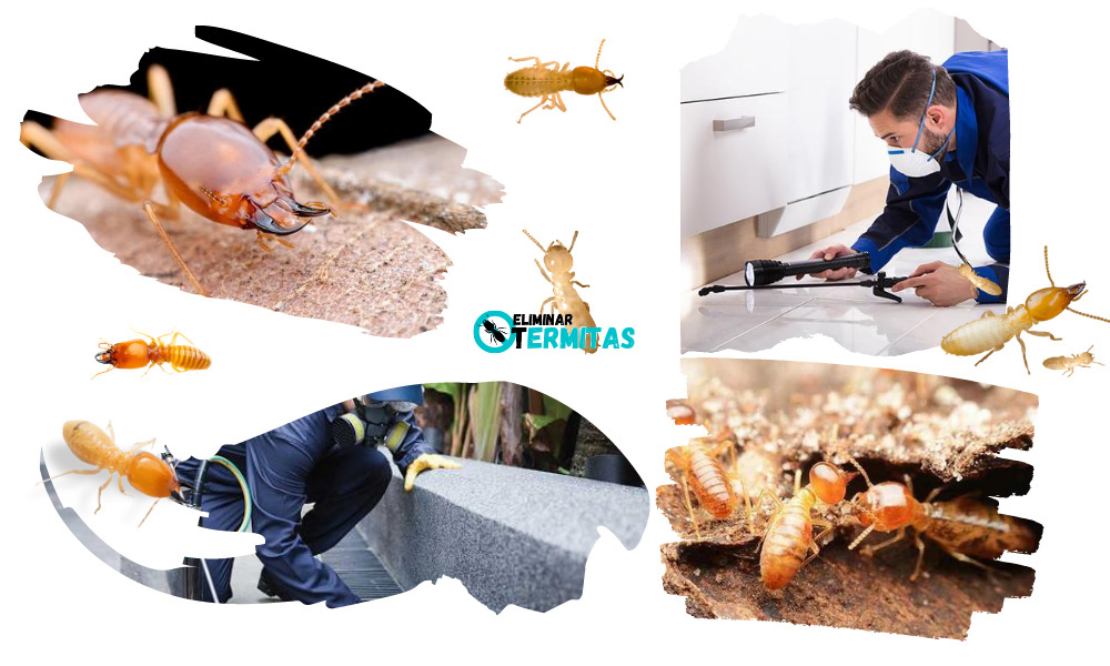Eliminar termitas en Endrinal