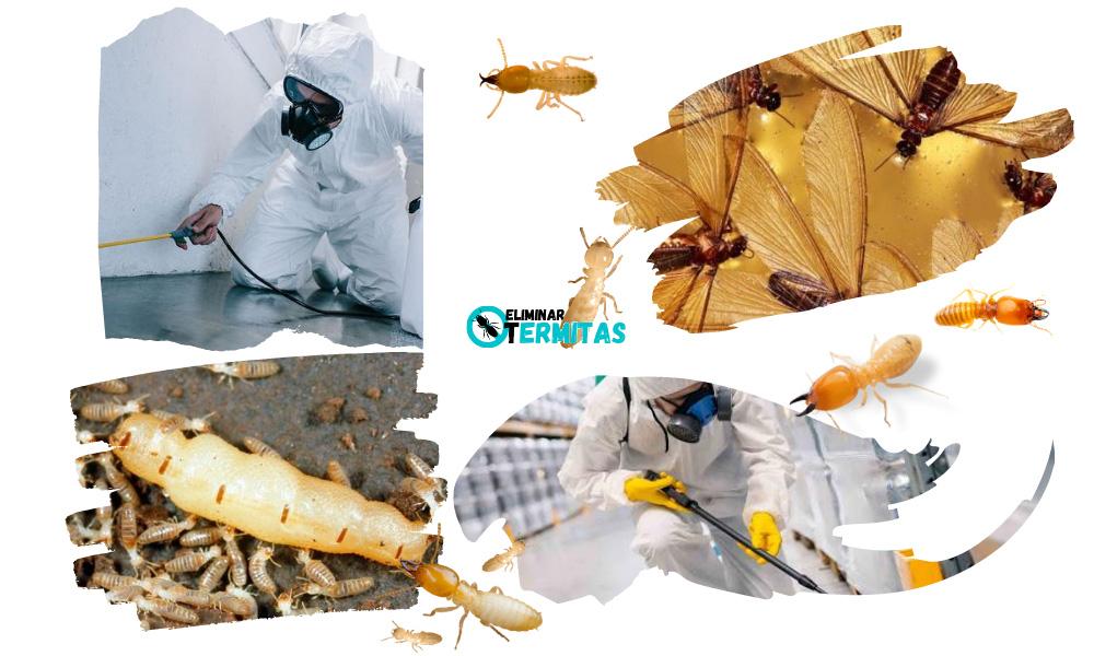 Eliminar termitas en Priaranza del Bierzo