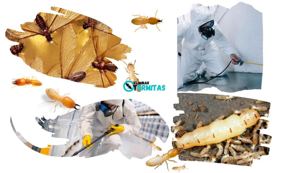 Eliminar termitas en Palencia