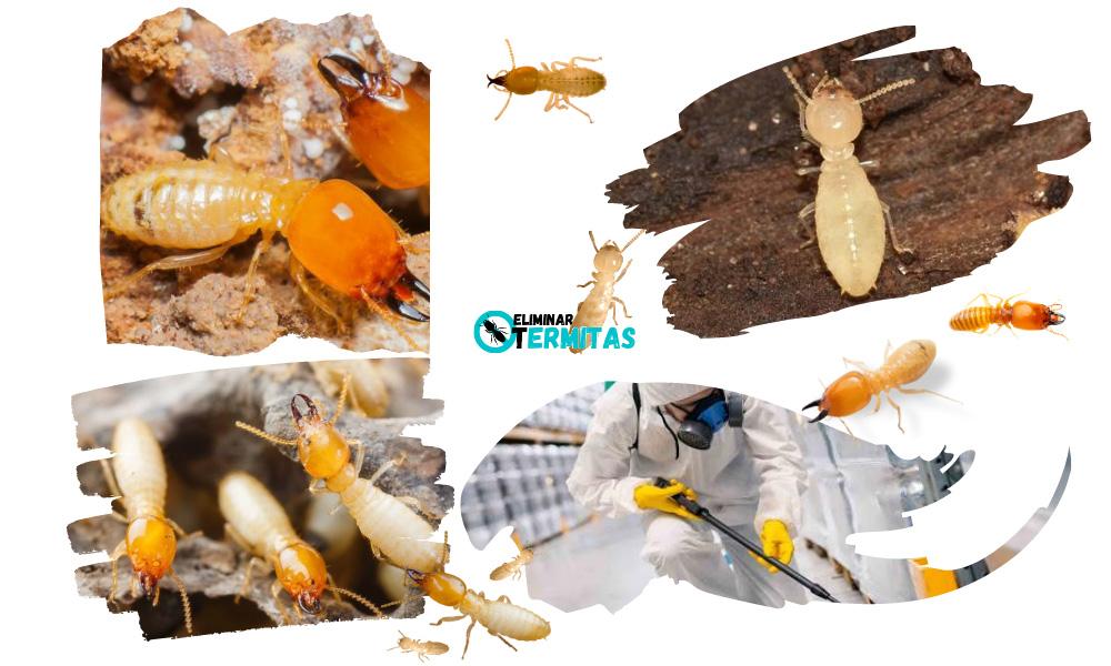 Eliminar termitas en Esparragosa de Lares