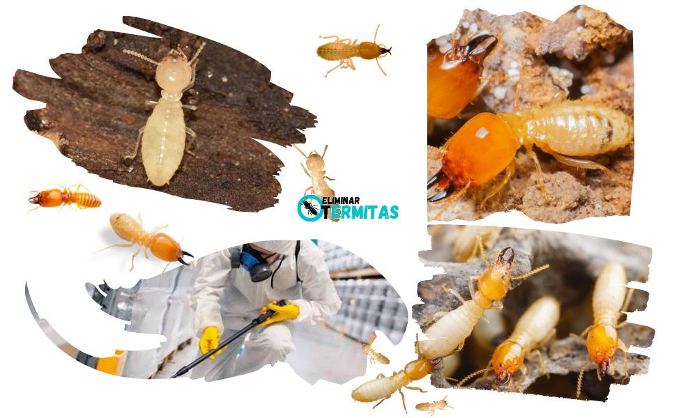 Eliminar termitas en Camponaraya