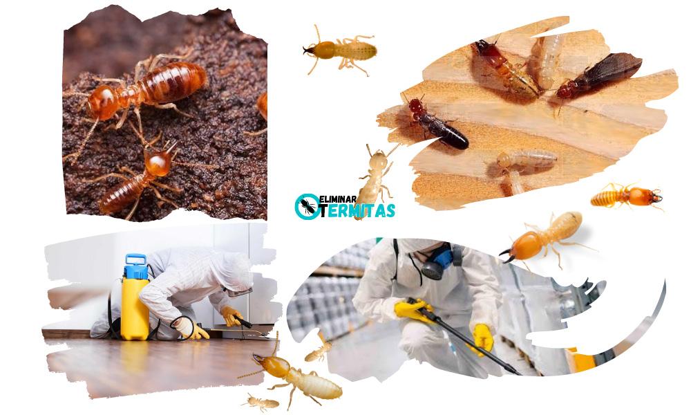 Eliminar termitas en Santa María de Sando