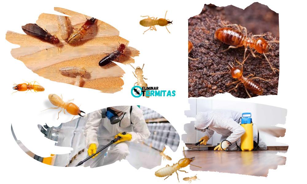 Eliminar termitas en Navales