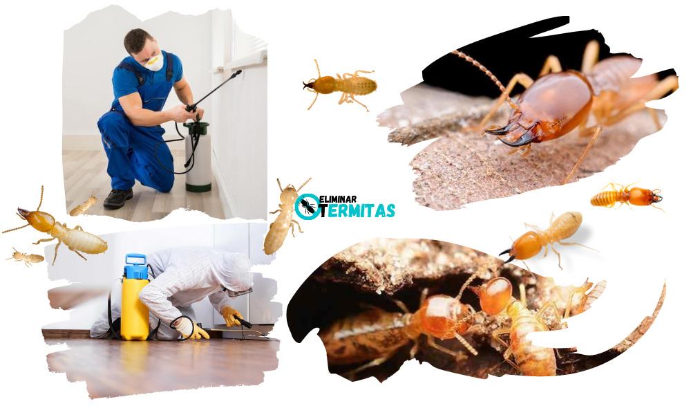 Tratamientos de termitas en Vecinos