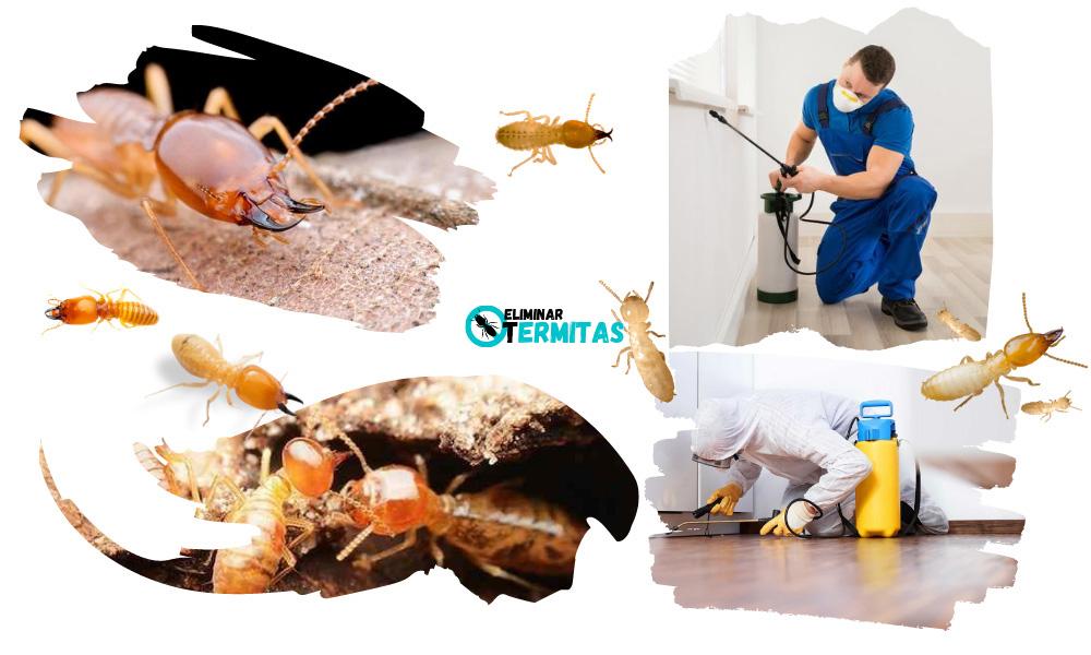 Tratamientos de termitas en Gerona