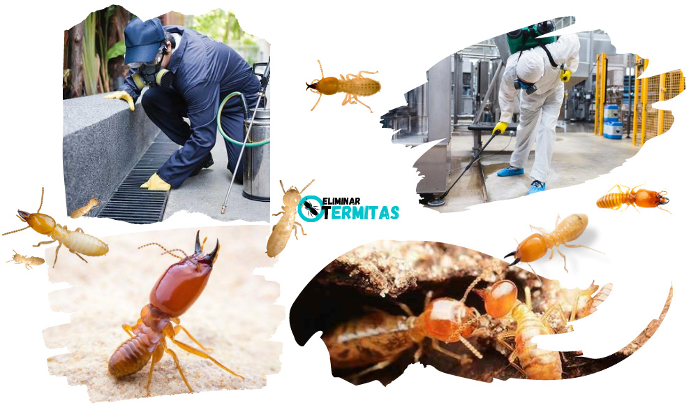 Tratamientos de termitas en Garcirrey