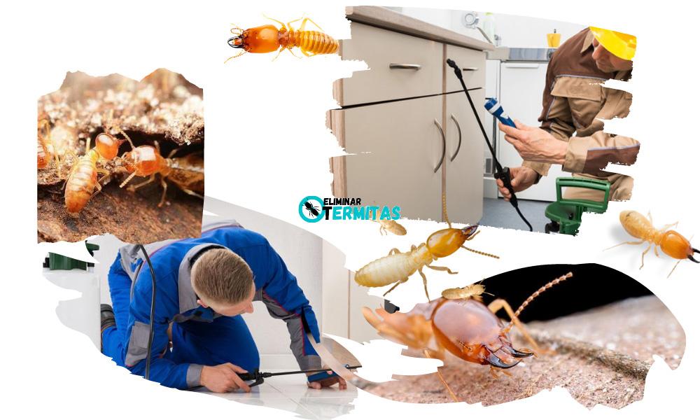 Eliminar termitas en Las Veguillas