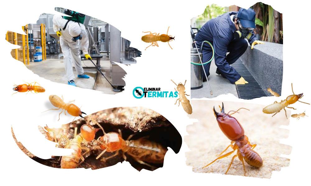 Tratamientos de termitas en Navales
