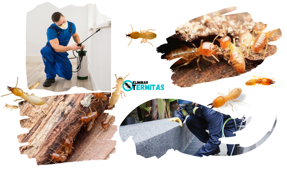 Tratamientos de termitas en Alconchel