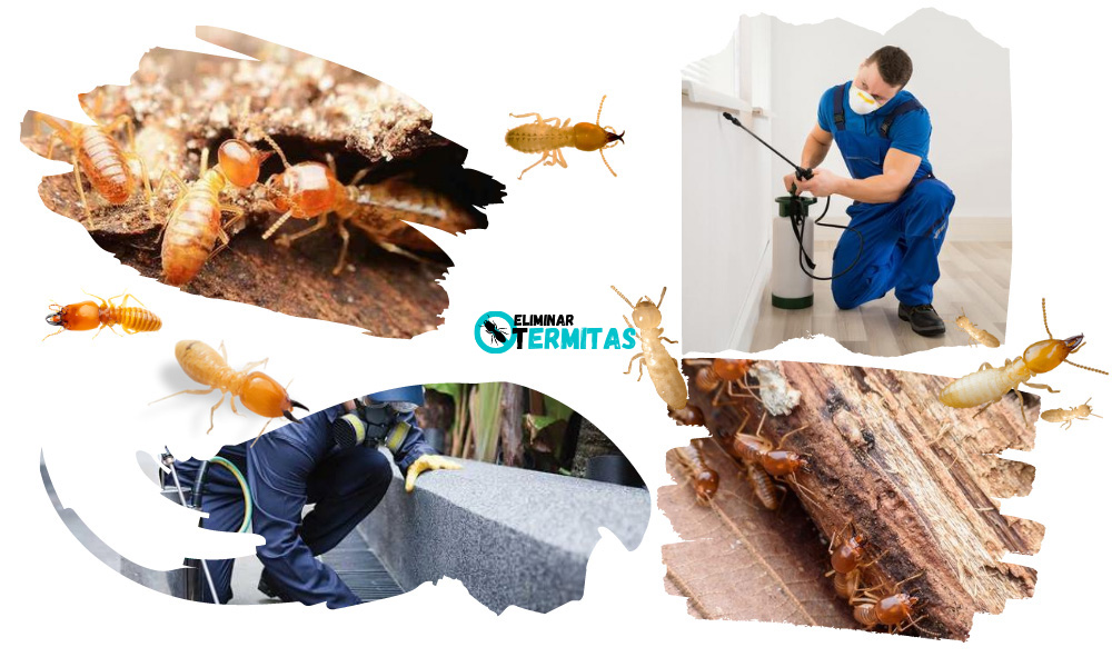 Tratamientos de termitas en Madrid