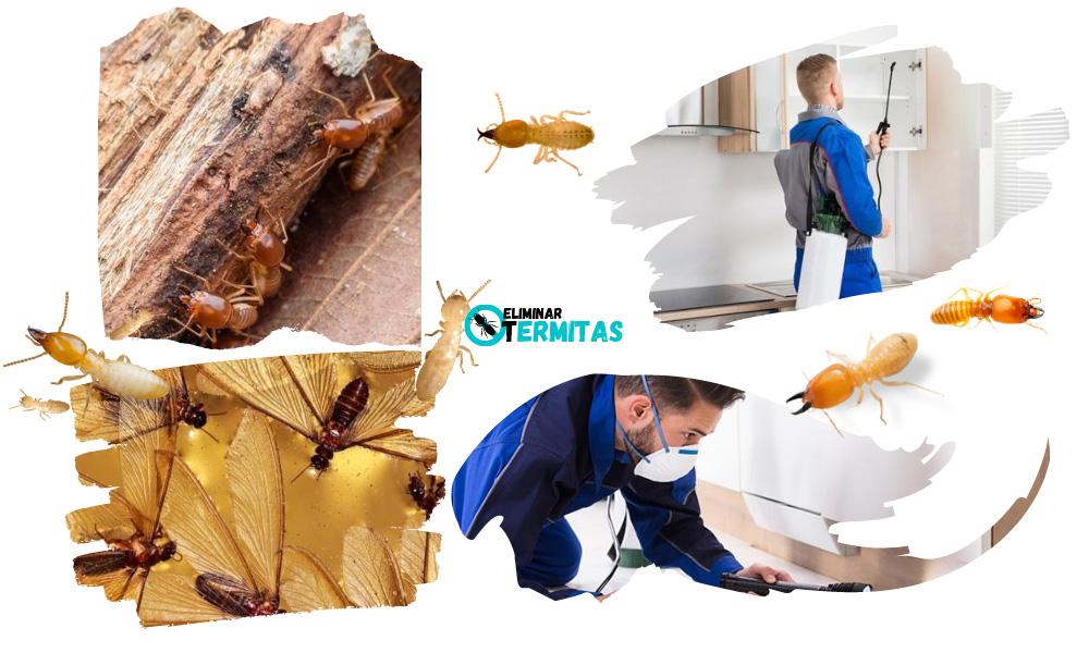 Tratamientos de termitas en Carrascal del Obispo