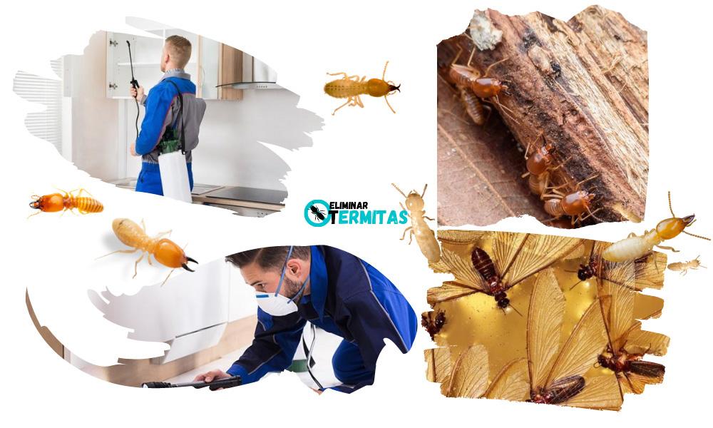 Tratamientos de termitas en Trasierra