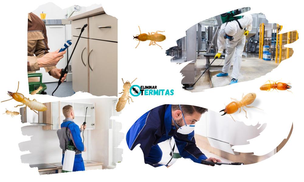 Tratamientos de termitas en Gallegos de Argañán