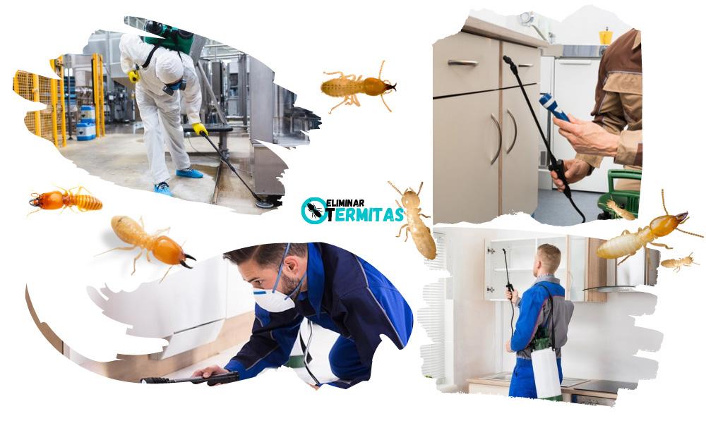 Tratamientos de termitas en Priaranza del Bierzo