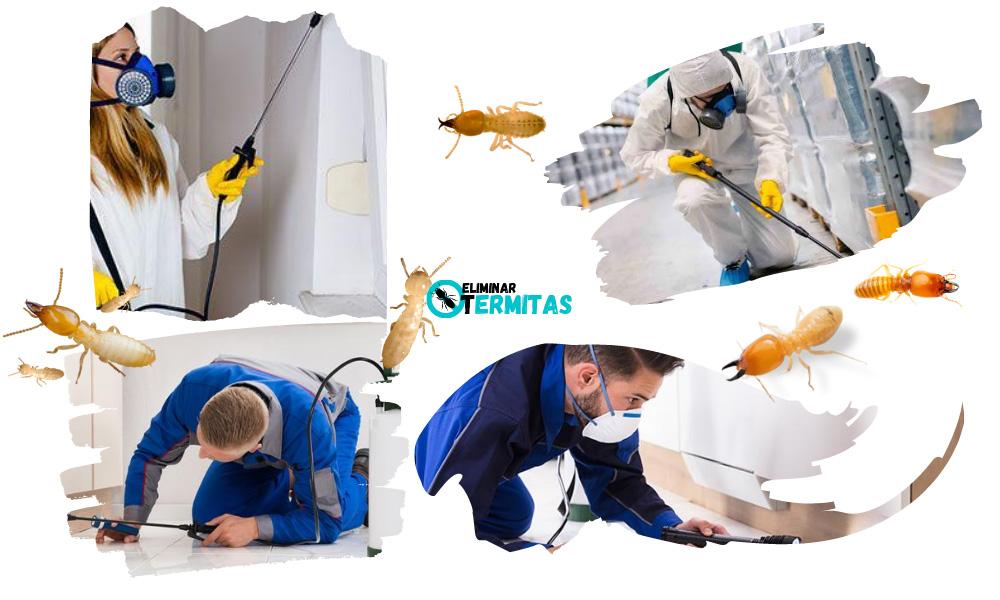 Tratamientos de termitas en La coruña