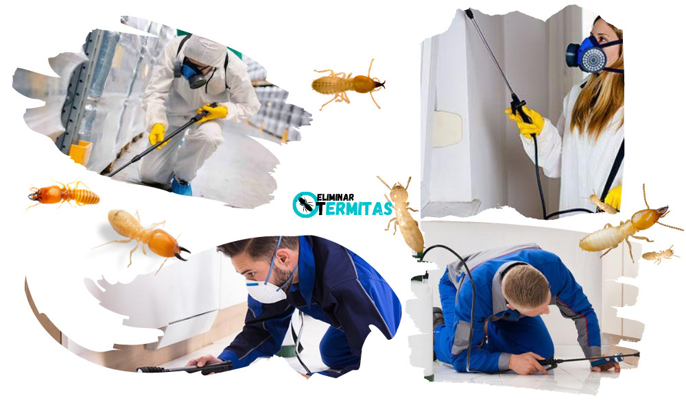 Tratamientos de termitas en Alconada