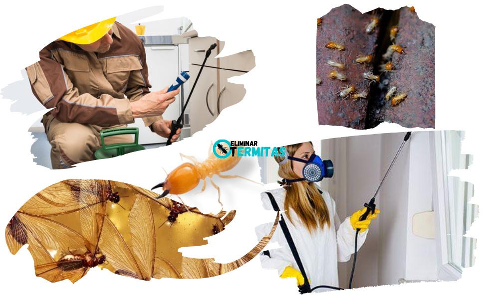 Tratamientos de termitas en Albacete
