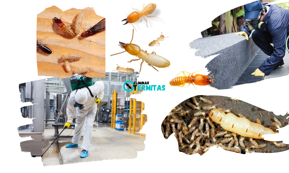 Eliminar termitas en Santa Marta de Tormes