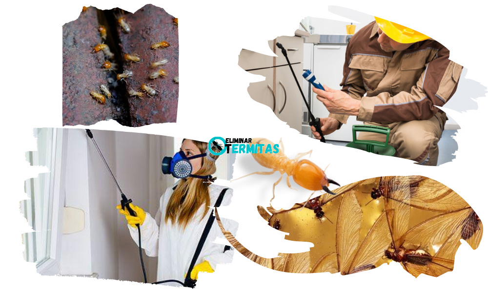 Tratamientos de termitas en Álava