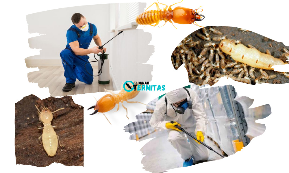 Tratamientos de termitas en Palencia