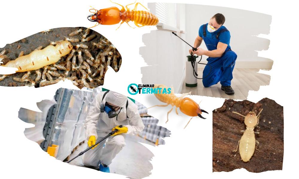 Tratamientos de termitas en Zamarra