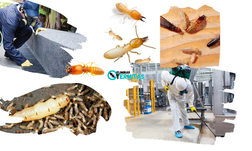 Eliminar termitas en Higuera la Real