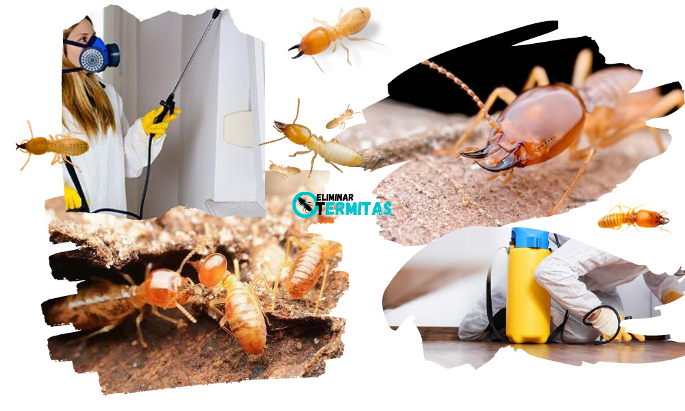 Eliminar termitas en Nogales