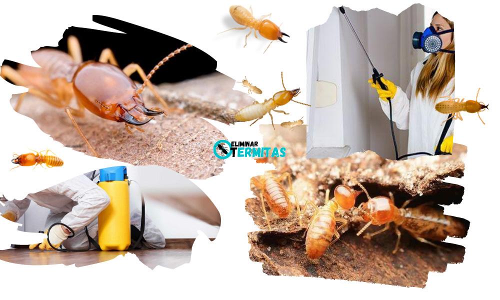Eliminar termitas en Barcarrota