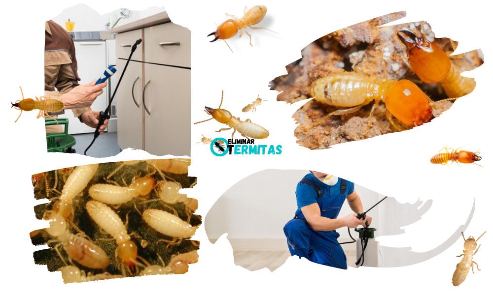 Eliminar termitas en Pajares de la Laguna